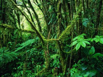 1101334__monteverde-rainforest-costa-rica_p