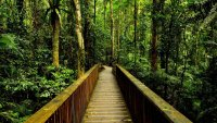 181548__rainforest-walkway_p