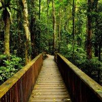 181548__rainforest-walkway_p