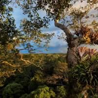parc-national-yasuni-en-equateur