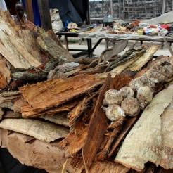 Les produits forestiers tels que les écorces, graines, et parfois produits animaux, sont prépondérants dans la culture médicinale africaine. La plupart des espèces d'arbres ont des usages médicinaux et rituels qui permettent la cohésion sociale et la pérennité de la culture des populations locales. Elodie (M2 2016-2017)
