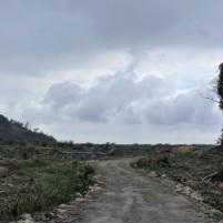 Triste contraste entre les forêts primaires de l'etat du Sarawak, malaisie, sur l'île de Borneo. Au premier plan, les arbres fraîchement abattus, prêts à être brûlé pour convertir la zone en plantations d'huile de palme. Au deuxième plan, de jeune palmier à huile, faisant seulement quelques mètre de haut. Sur les collines bordant l'arrière plan, une jungle d'une époustouflante biodiversité, contenant des dizaines d'espèces encore non décrite dans la littérature. La frontière entre ces terres de dévastation et ce jardin d'Eden: un ruisseau de 3 mètre de large et la promesse de la compagnie d'exploitation de ne pas le franchir …. (Mich, M2 2016-2017)