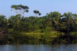 Les lagunes sont des écosystèmes particuliers à la croisée des rivières et de l'océan, dont l'eau est saumâtre. Ici la lagune de Conkouati en République du Congo héberge des espèces emblématiques comme le lamantin, des chimpanzés sur ses berges et de nombreuses espèces végétales endémiques. Cet écosystème riche permet la subsistance des populations locales de pêcheurs mais est menacé par la pollution marine issue de la ville de Pointe-Noire et des puits de pétrole off-shore, ainsi que par la surpêche des bateaux étrangers. Auteur: Elodie Manca