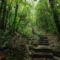Sentier dans le parc national de la Guadeloupe (c) E.Lebreton (M2 BioGET 2018-2019)