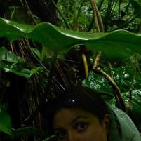 J'ai trouvé un super parapluie naturel sur le terrain (feuille géante de philodendron) (c) E.Lebreton (M2 BioGET 2018-2019)