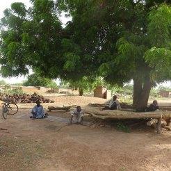 L'arbre à palabre sous lequel les anciens sont assis presque toute la journée.
