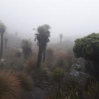 La neblina (brouillard) recouvre complétement le paysage dans la réserve naturelle d'Iguaque. Ces masses d'humidité peuvent se déplacer rapidement avec les vents d'altitude entrainant de brusques modifications des conditions d'humidité et de température. Photo : Ewen Dano.