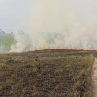 Congo savane brule