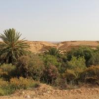 Maroc oasis