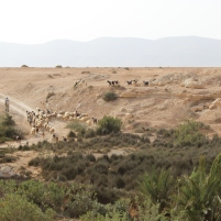 Maroc vallée