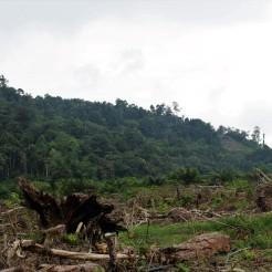Palemraie Borneo